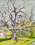 painting of a catalpa tree with no leaves